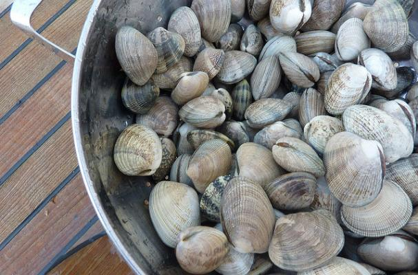 Puget Sound Clams